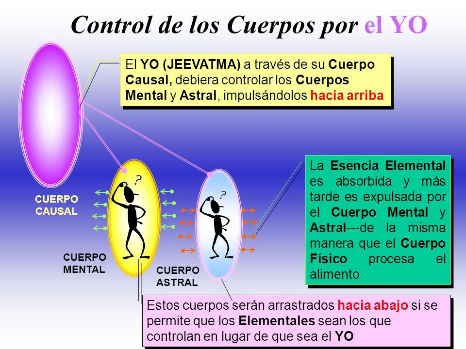 ATMICO BUDDHICO MENTAL ASTRAL FISICO 1er REINO ELE. 2do REINO ELE. 3er REINO ELEMENTAL REINO MINERAL REINO VEGETAL REINO HUMANO REINO ANIMAL Esencia M