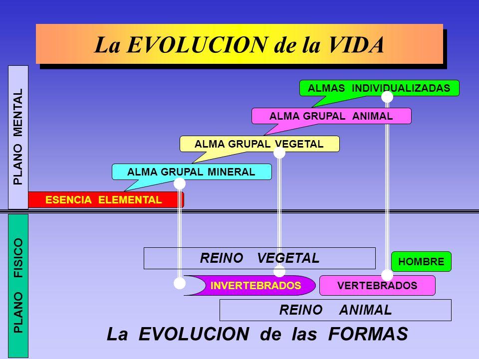 La EVOLUCION de la VIDA La EVOLUCION de la VIDA ALMAS INDIVIDUALIZADAS ALMA GRUPAL VEGETAL ALMA GRUPAL MINERAL ESENCIA ELEMENTAL HOMBRE VERTEBRADOSINVERTEBRADOS REINO ANIMAL ALMA GRUPAL ANIMAL REINO VEGETAL PLANO FISICO PLANO MENTAL La EVOLUCION de las FORMAS