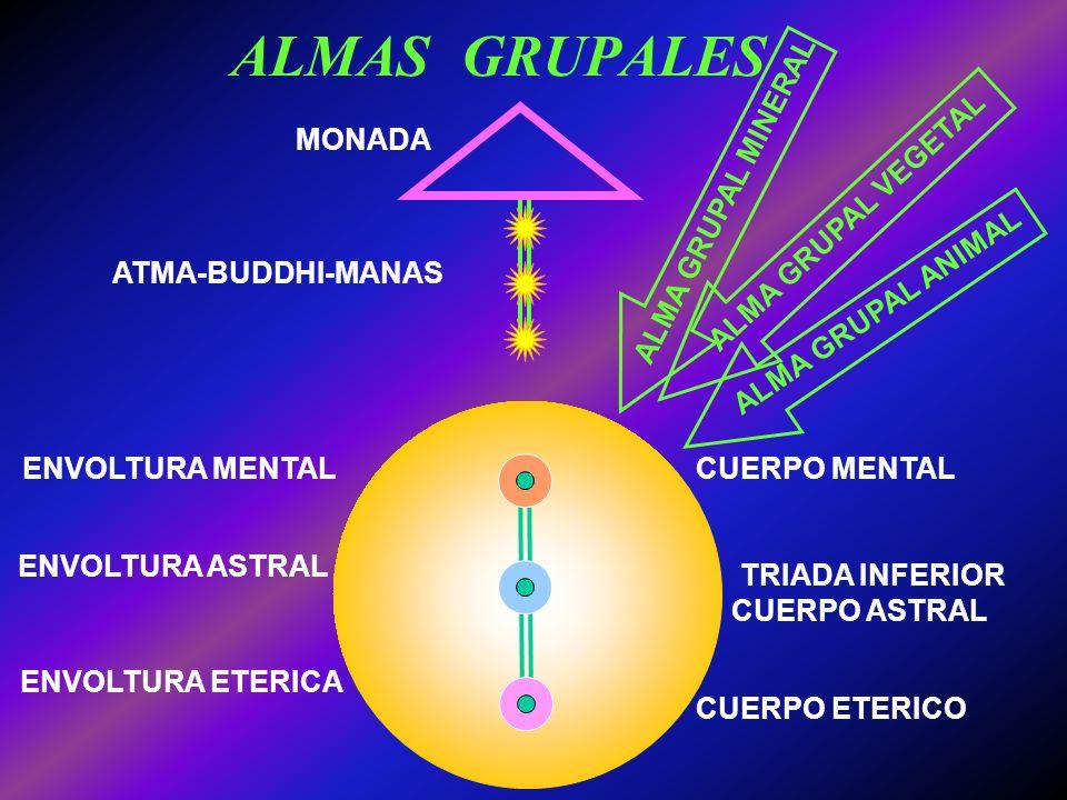 La EVOLUCION de la VIDA La EVOLUCION de la VIDA ALMAS INDIVIDUALIZADAS ALMA GRUPAL VEGETAL ALMA GRUPAL MINERAL ESENCIA ELEMENTAL HOMBRE VERTEBRADOSINV