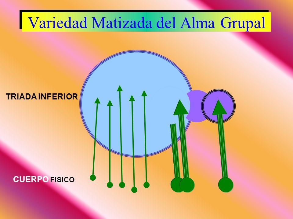 Variedad Matizada del Alma Grupal Variedad Matizada del Alma Grupal TRIADA INFERIOR CUERPO FISICO