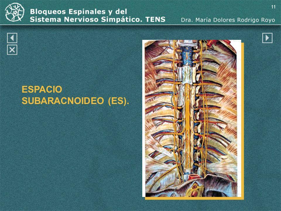 11 ESPACIO SUBARACNOIDEO (ES).