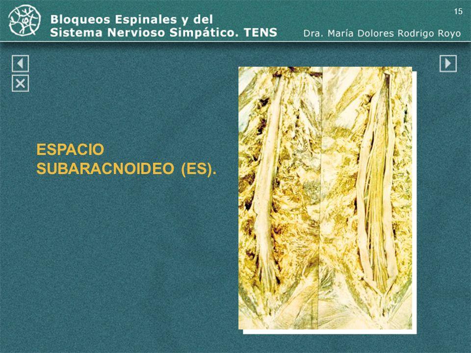 15 ESPACIO SUBARACNOIDEO (ES).