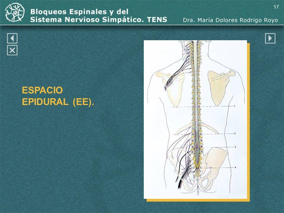 17 ESPACIO EPIDURAL (EE).