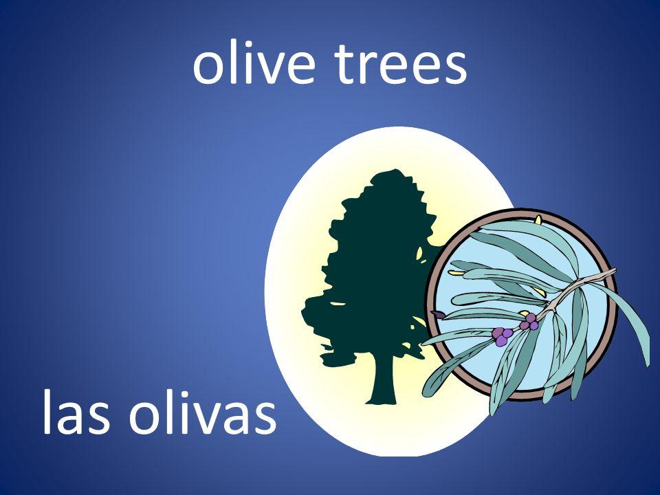 olive trees las olivas