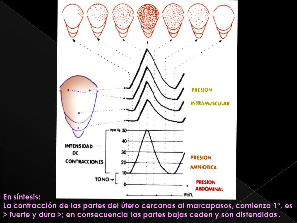 En síntesis: La contracción de las partes del útero cercanas al marcapasos, comienza 1°, es > fuerte y dura >; en consecuencia las partes bajas ceden
