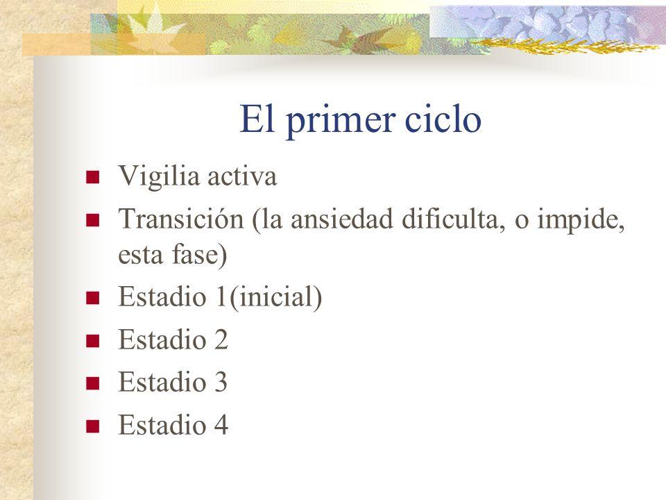 El primer ciclo Vigilia activa Transición (la ansiedad dificulta, o impide, esta fase) Estadio 1(inicial) Estadio 2 Estadio 3 Estadio 4