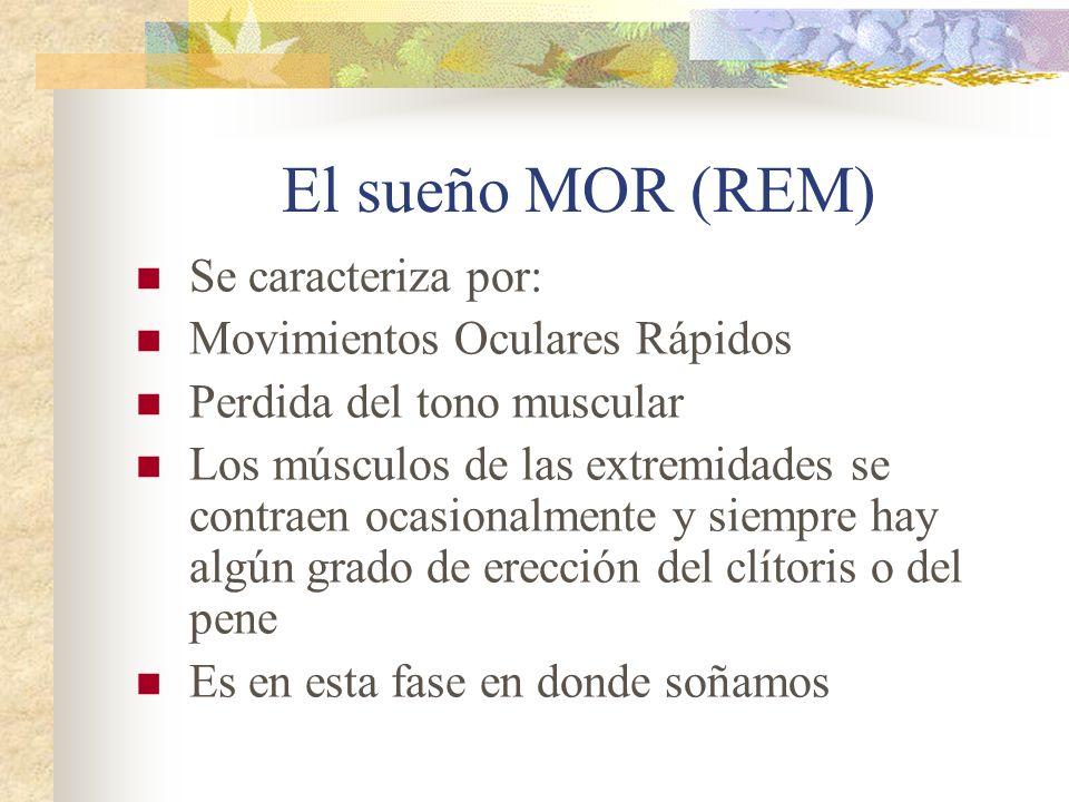 El sueño MOR (REM) Se caracteriza por: Movimientos Oculares Rápidos Perdida del tono muscular Los músculos de las extremidades se contraen ocasionalmente y siempre hay algún grado de erección del clítoris o del pene Es en esta fase en donde soñamos