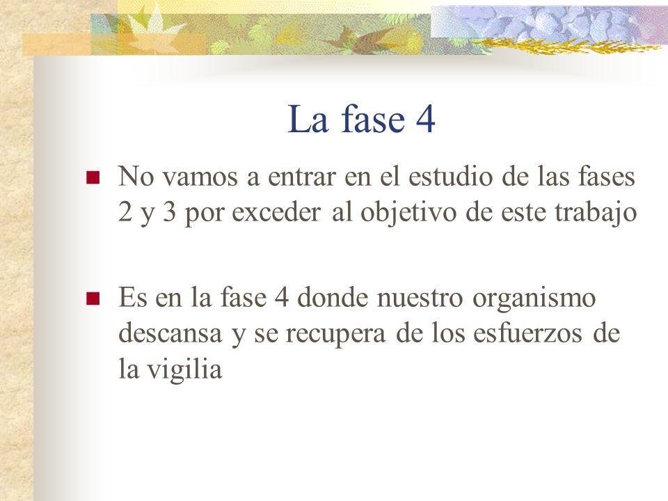 La fase 4 No vamos a entrar en el estudio de las fases 2 y 3 por exceder al objetivo de este trabajo Es en la fase 4 donde nuestro organismo descansa y se recupera de los esfuerzos de la vigilia