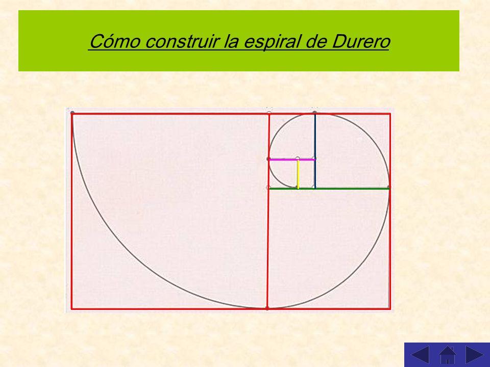 Cómo construir la espiral de Durero Repetir animación Simplemente se trata de construir una sucesión de rectángulos áureos y unir los vértices diagona