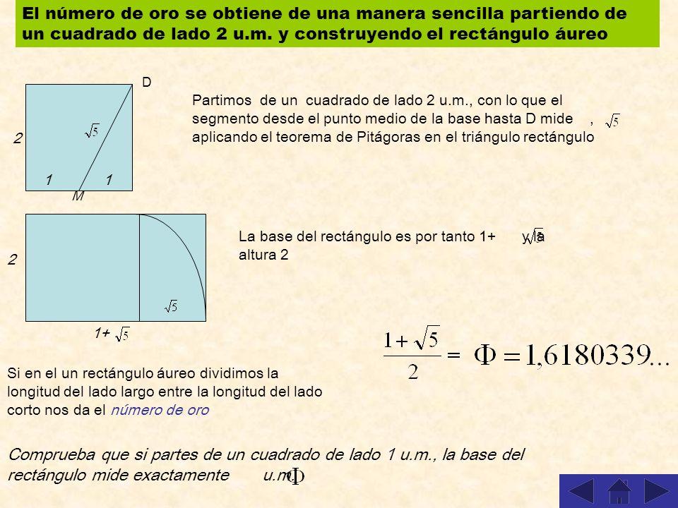 El número de oro se obtiene de una manera sencilla partiendo de un cuadrado de lado 2 u.m.
