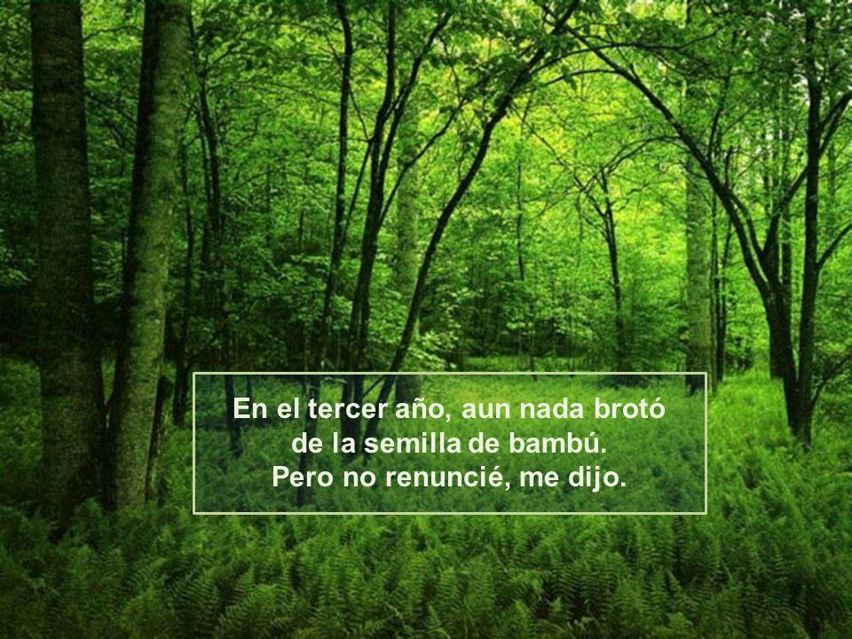 Y nuevamente, nada creció de la semilla de bambú. Pero no renuncié al bambú. Dijo El.