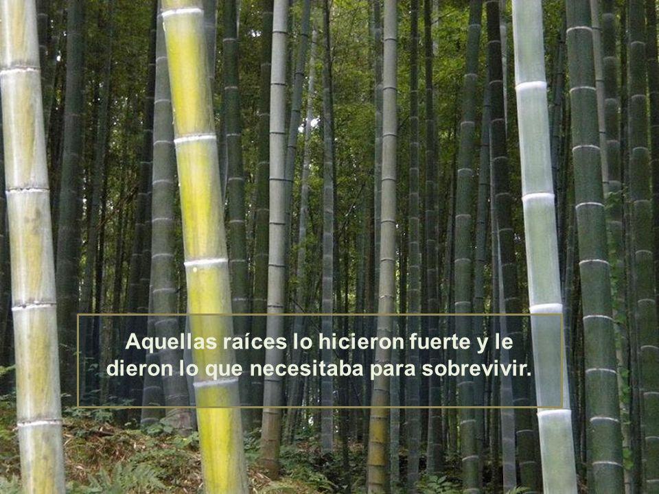 Pero sólo seis meses después, el bambú creció, más de 100 pies de altura. Se la había pasado cinco años echando raíces.
