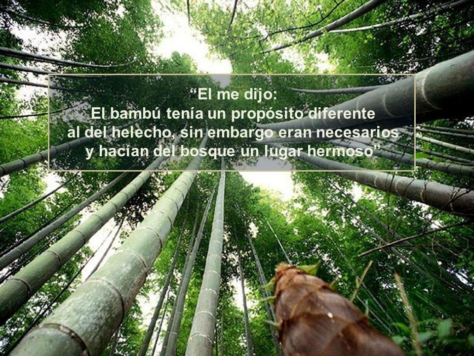 No renunciaría al bambú. Nunca renunciaría a ti. No te compares con otros