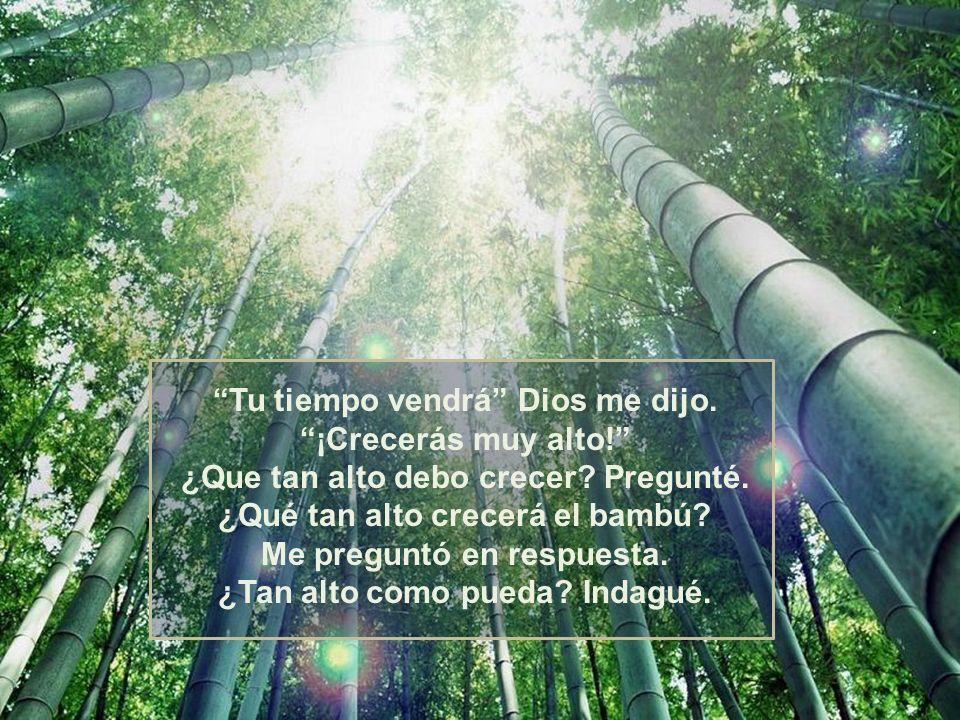 El me dijo: El bambú tenía un propósito diferente al del helecho, sin embargo eran necesarios y hacían del bosque un lugar hermoso