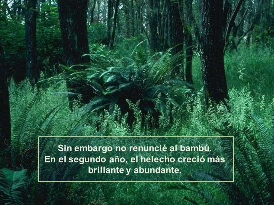 El helecho rápidamente creció. Su verde brillante cubría el suelo. Pero nada salió de la semilla del bambú.