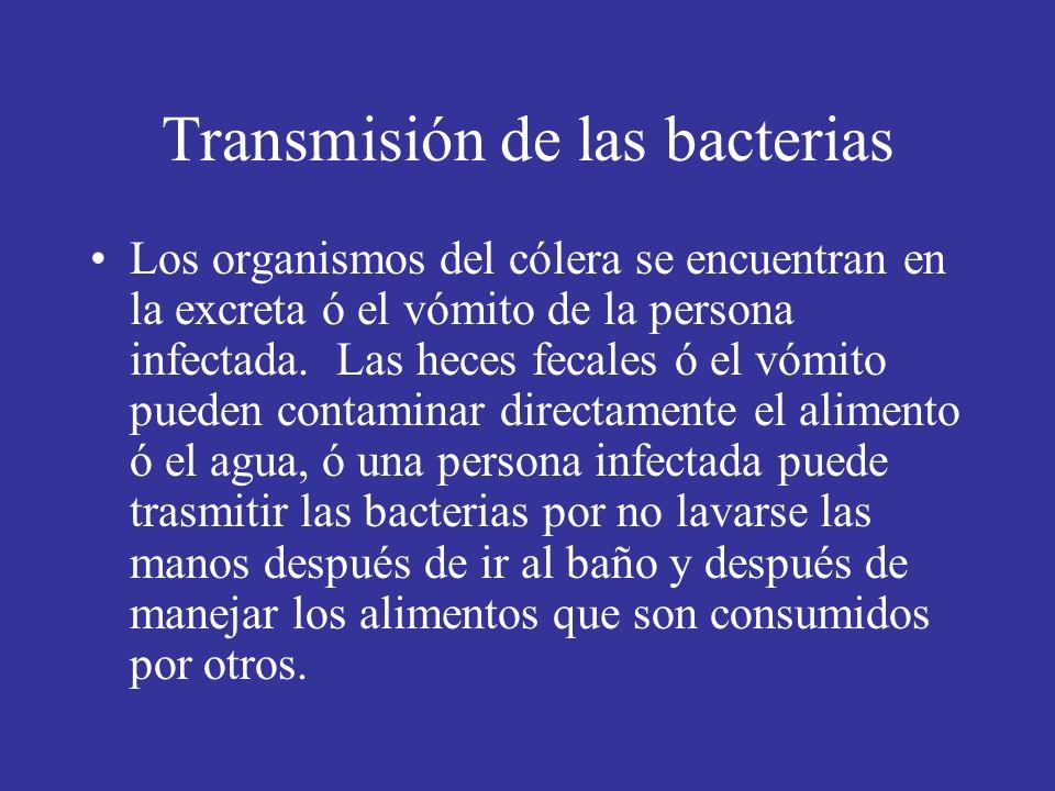 Transmisión de las bacterias Los organismos del cólera se encuentran en la excreta ó el vómito de la persona infectada.
