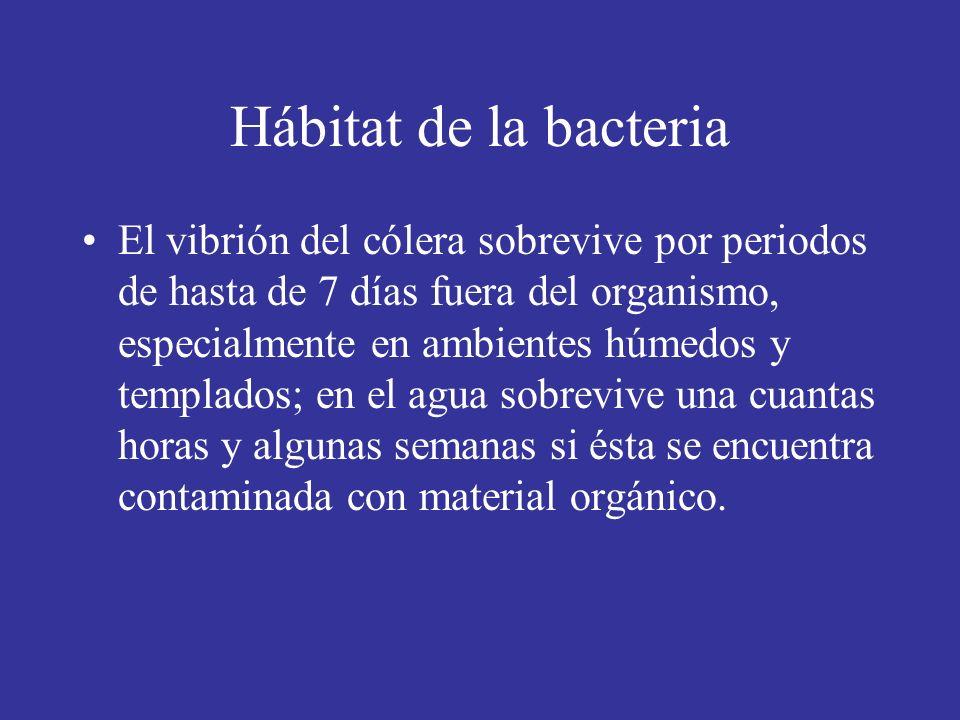 Hábitat de la bacteria El vibrión del cólera sobrevive por periodos de hasta de 7 días fuera del organismo, especialmente en ambientes húmedos y templados; en el agua sobrevive una cuantas horas y algunas semanas si ésta se encuentra contaminada con material orgánico.