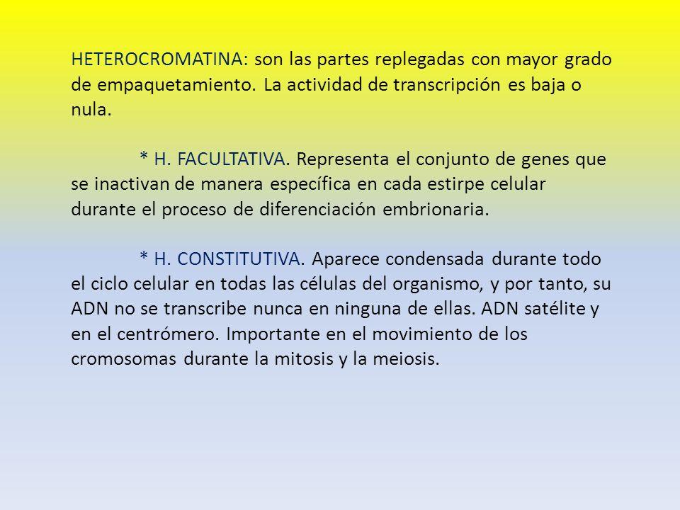 HETEROCROMATINA: son las partes replegadas con mayor grado de empaquetamiento. La actividad de transcripción es baja o nula. * H. FACULTATIVA. Represe