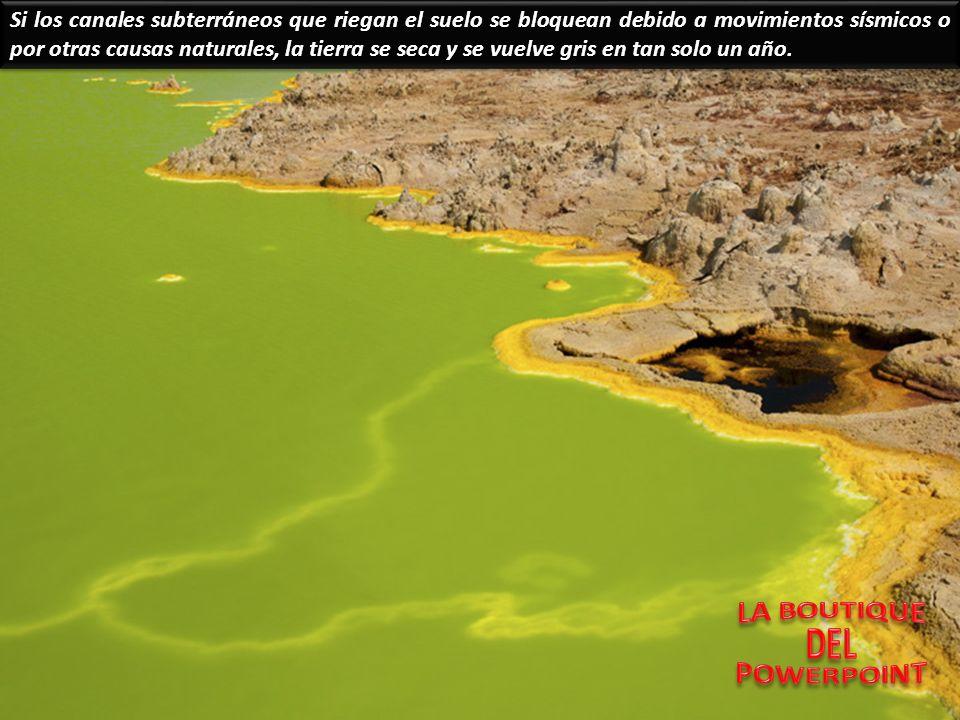 El cráter del Dallol es un amplio páramo salino donde surgen múltiples mini-chimeneas de hadas de sal y azufre.