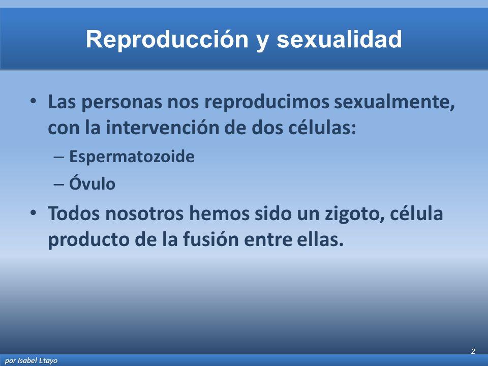 Las personas nos reproducimos sexualmente, con la intervención de dos células: – Espermatozoide – Óvulo Todos nosotros hemos sido un zigoto, célula pr