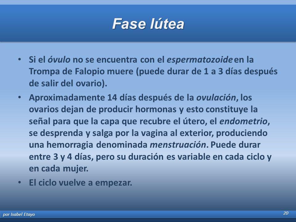 Fase lútea Si el óvulo no se encuentra con el espermatozoide en la Trompa de Falopio muere (puede durar de 1 a 3 días después de salir del ovario). Ap