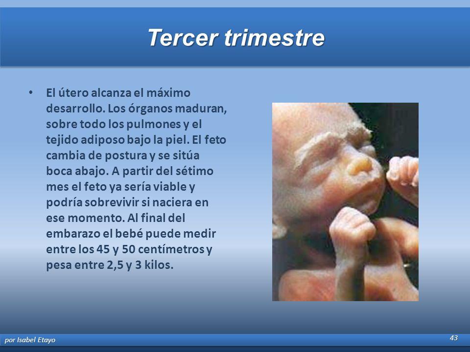 Tercer trimestre El útero alcanza el máximo desarrollo. Los órganos maduran, sobre todo los pulmones y el tejido adiposo bajo la piel. El feto cambia