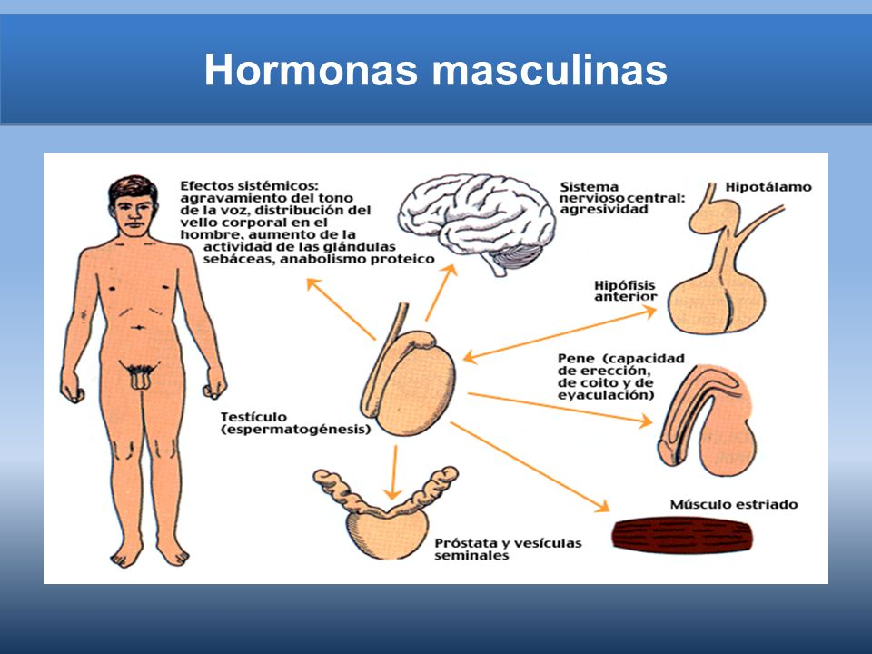 Fecundación En una sola emisión de semen,- un hombre suele expulsar centenares de millones de espermatozoides, células que recuerdan a renacuajos, con cabezas aplanadas y largas colas.espermatozoides Sin embargo, sólo unos cientos llegarán al óvulo en la parte superior de las trompas de Falopio...