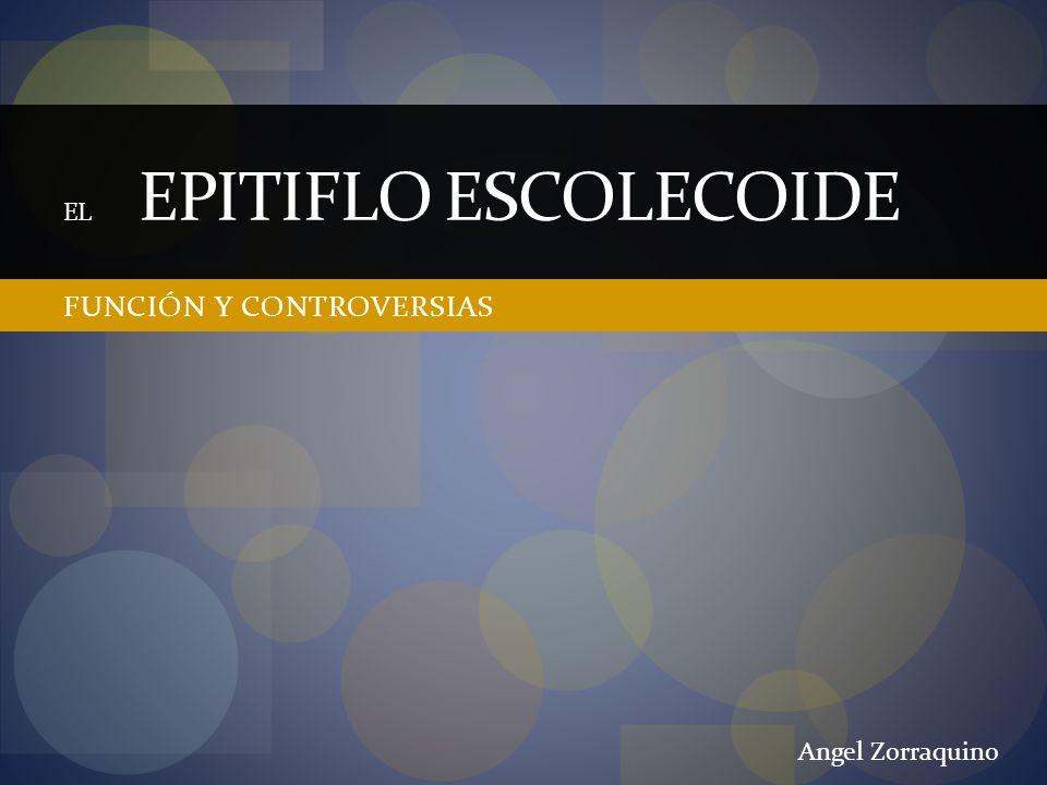 FUNCIÓN Y CONTROVERSIAS EL EPITIFLO ESCOLECOIDE Angel Zorraquino