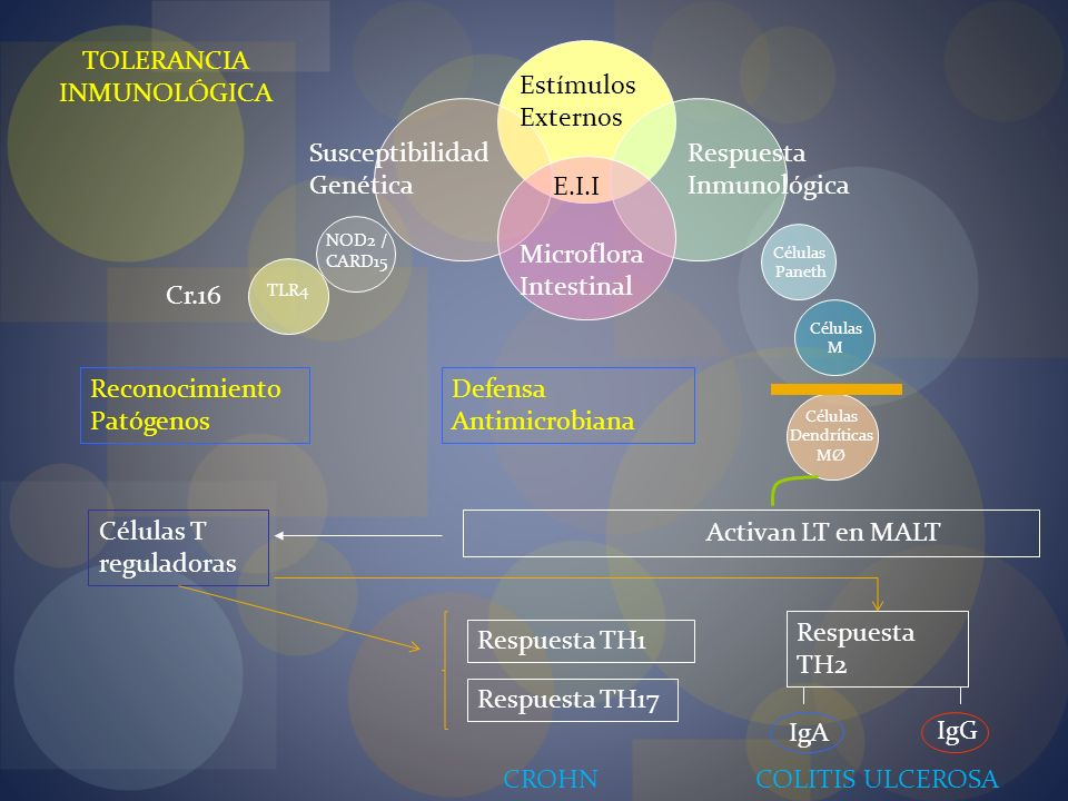 Microflora Intestinal Susceptibilidad Genética Respuesta Inmunológica Estímulos Externos E.I.I Células Paneth Defensa Antimicrobiana Células M NOD2 /