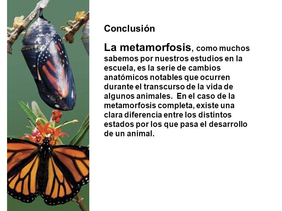 Conclusión La metamorfosis, como muchos sabemos por nuestros estudios en la escuela, es la serie de cambios anatómicos notables que ocurren durante el