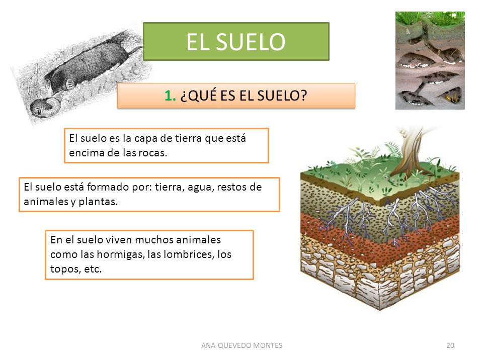 ANA QUEVEDO MONTES20 EL SUELO 1. ¿QUÉ ES EL SUELO? El suelo es la capa de tierra que está encima de las rocas. El suelo está formado por: tierra, agua
