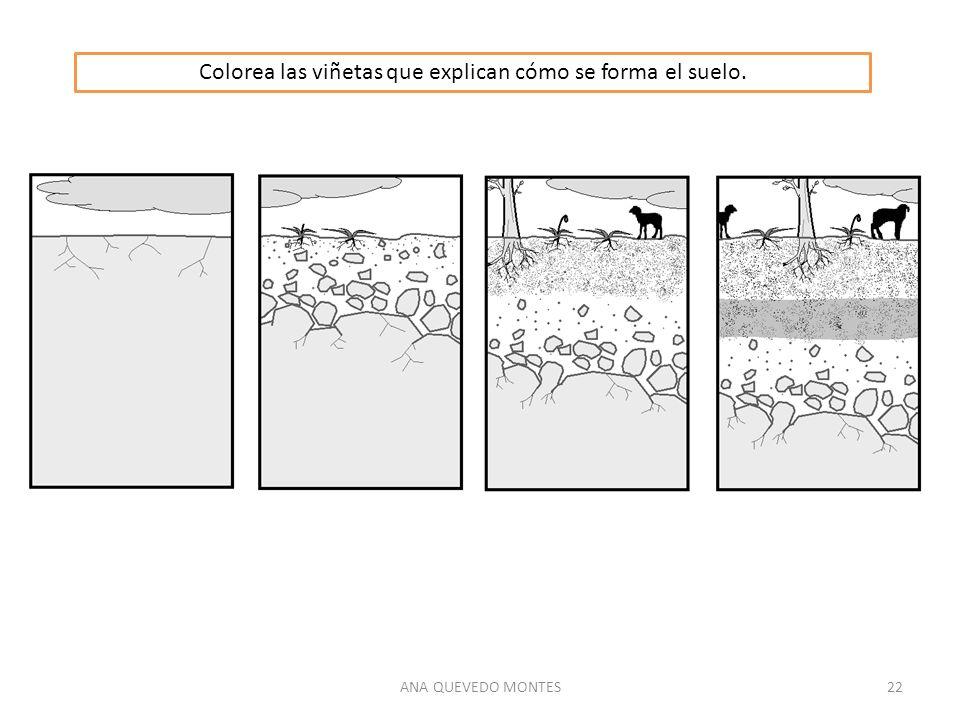 ANA QUEVEDO MONTES22 Colorea las viñetas que explican cómo se forma el suelo.
