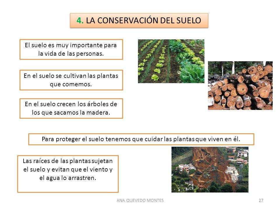 ANA QUEVEDO MONTES27 4. LA CONSERVACIÓN DEL SUELO El suelo es muy importante para la vida de las personas. En el suelo se cultivan las plantas que com