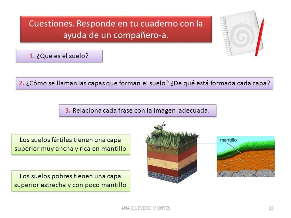 ANA QUEVEDO MONTES28 Cuestiones. Responde en tu cuaderno con la ayuda de un compañero-a. 1. ¿Qué es el suelo? 2. ¿Cómo se llaman las capas que forman