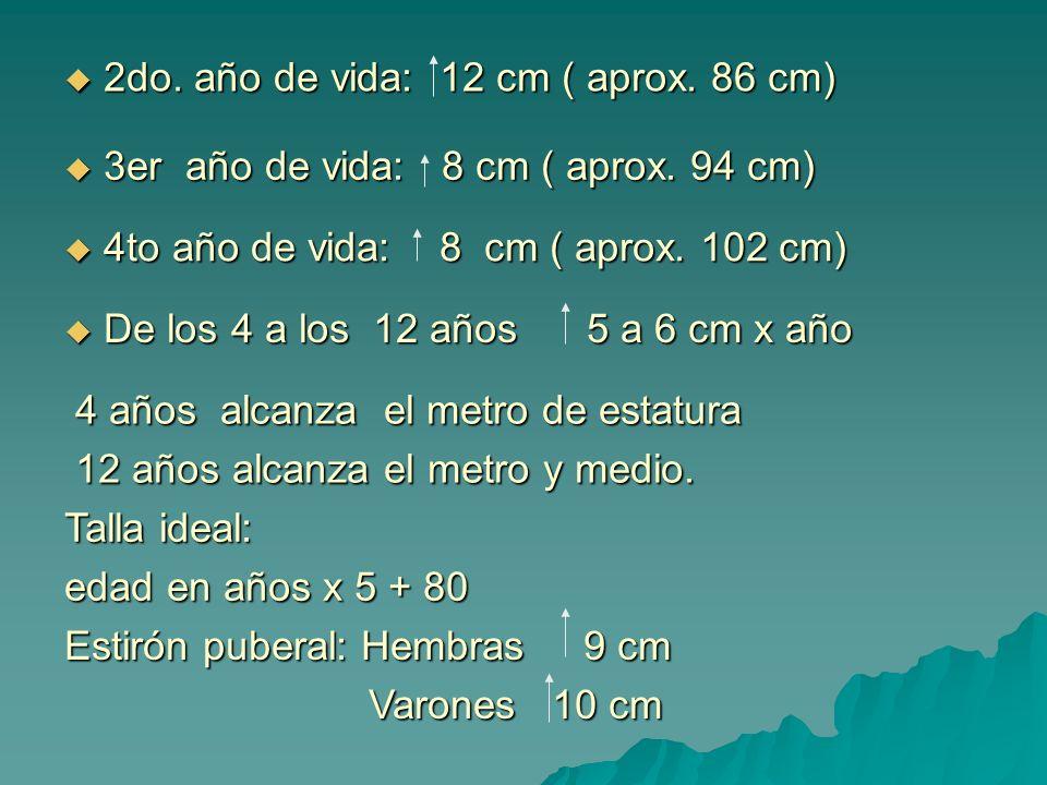 2do. año de vida: 12 cm ( aprox. 86 cm) 2do. año de vida: 12 cm ( aprox. 86 cm) 3er año de vida: 8 cm ( aprox. 94 cm) 3er año de vida: 8 cm ( aprox. 9