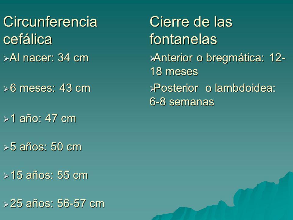 Circunferencia cefálica Cierre de las fontanelas Al nacer: 34 cm Al nacer: 34 cm Anterior o bregmática: 12- 18 meses Anterior o bregmática: 12- 18 mes
