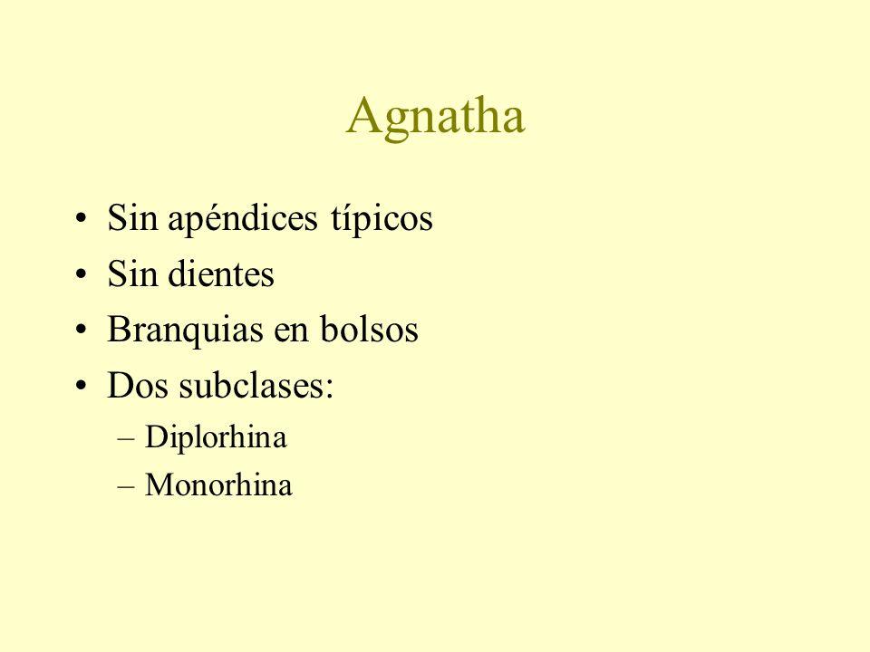 Agnatha Sin apéndices típicos Sin dientes Branquias en bolsos Dos subclases: –Diplorhina –Monorhina