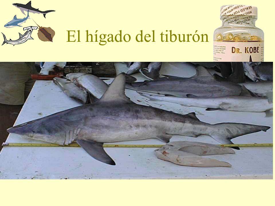 El hígado del tiburón