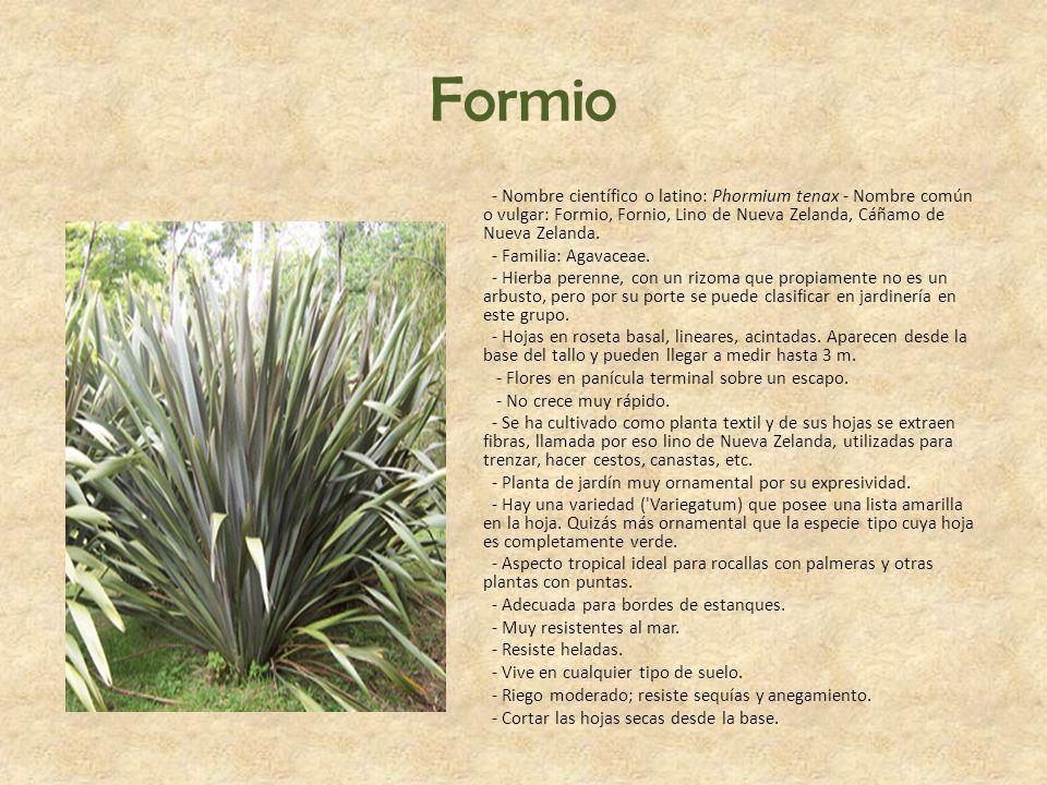 Formio - Nombre científico o latino: Phormium tenax - Nombre común o vulgar: Formio, Fornio, Lino de Nueva Zelanda, Cáñamo de Nueva Zelanda. - Familia