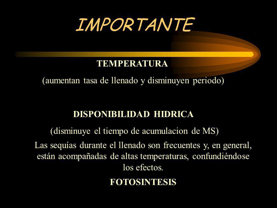 IMPORTANTE TEMPERATURA (aumentan tasa de llenado y disminuyen periodo) DISPONIBILIDAD HIDRICA (disminuye el tiempo de acumulacion de MS) Las sequías d