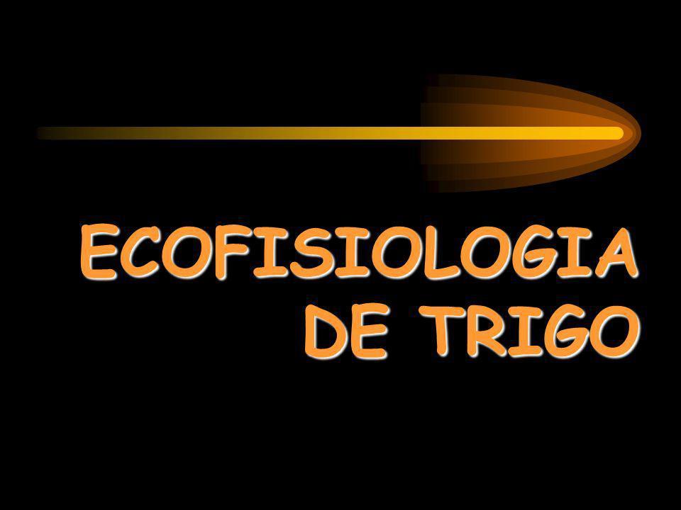 ECOFISIOLOGIA DE TRIGO