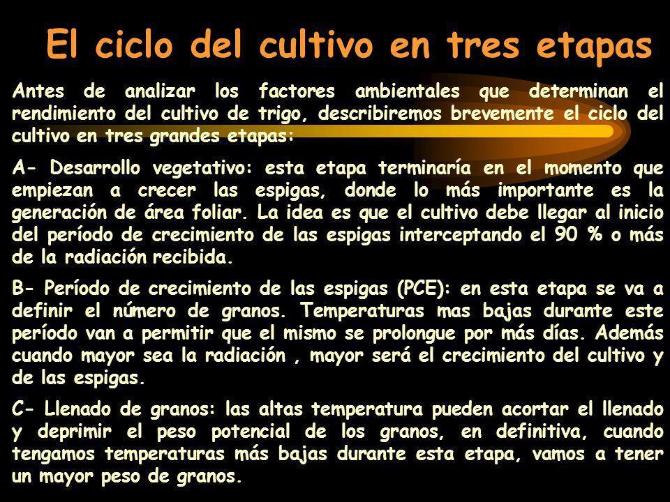 Antes de analizar los factores ambientales que determinan el rendimiento del cultivo de trigo, describiremos brevemente el ciclo del cultivo en tres g
