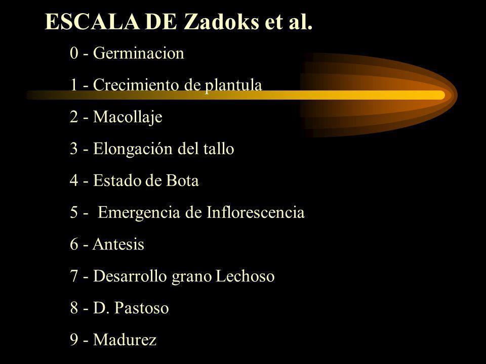 ESCALA DE Zadoks et al. 0 - Germinacion 1 - Crecimiento de plantula 2 - Macollaje 3 - Elongación del tallo 4 - Estado de Bota 5 - Emergencia de Inflor