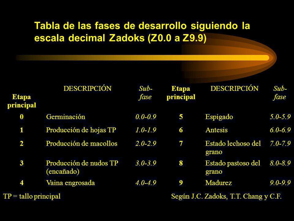 Tabla de las fases de desarrollo siguiendo la escala decimal Zadoks (Z0.0 a Z9.9) Etapa principal DESCRIPCIÓNSub- fase Etapa principal DESCRIPCIÓNSub-