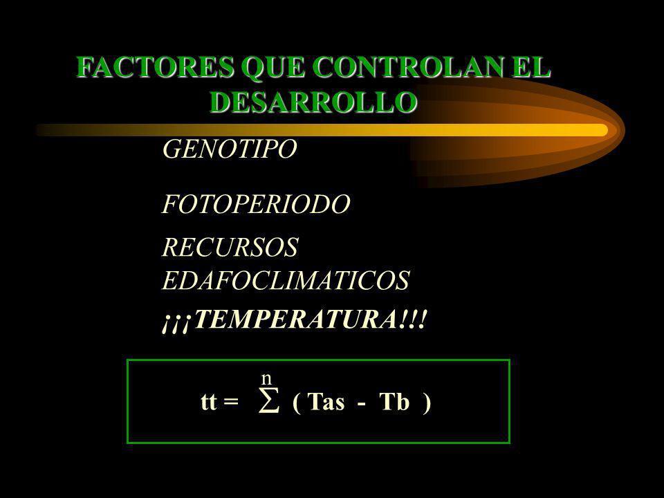 FACTORES QUE CONTROLAN EL DESARROLLO tt = ( Tas - Tb ) n ¡¡¡TEMPERATURA!!! GENOTIPO RECURSOS EDAFOCLIMATICOS FOTOPERIODO
