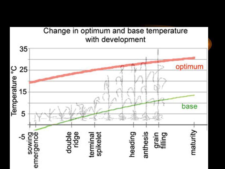 Cambios de las temperaturas base y óptima de acuerdo a las fases de desarrollo