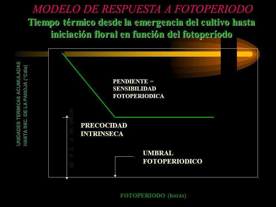 Tiempo térmico desde la emergencia del cultivo hasta iniciación floral en función del fotoperíodo MODELO DE RESPUESTA A FOTOPERIODO FOTOPERIODO (horas