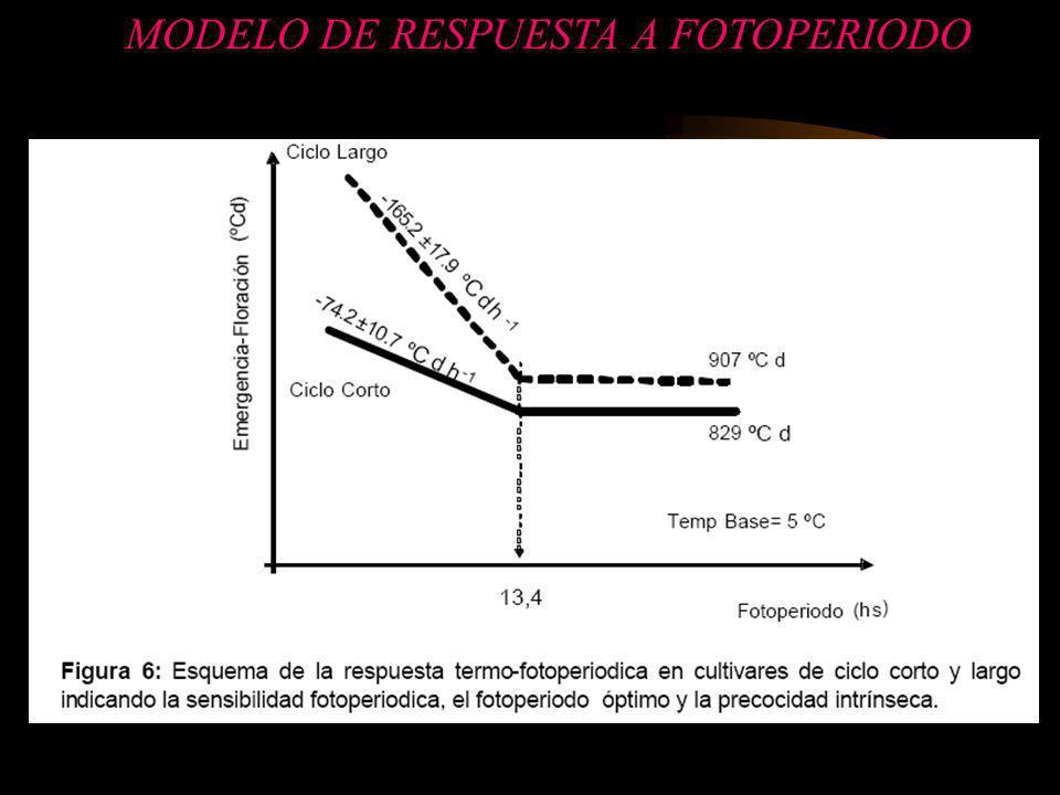 MODELO DE RESPUESTA A FOTOPERIODO