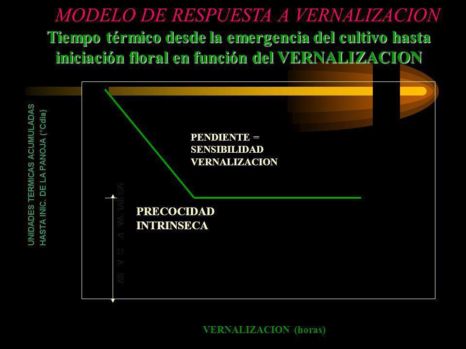Tiempo térmico desde la emergencia del cultivo hasta iniciación floral en función del VERNALIZACION MODELO DE RESPUESTA A VERNALIZACION VERNALIZACION