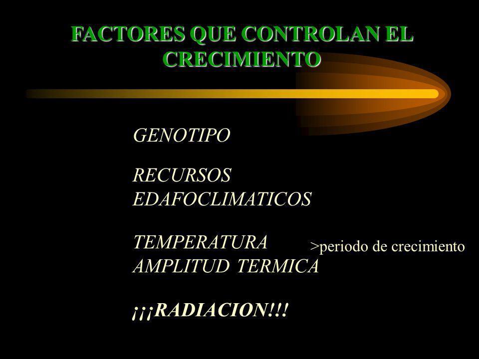 FACTORES QUE CONTROLAN EL CRECIMIENTO GENOTIPO TEMPERATURA AMPLITUD TERMICA RECURSOS EDAFOCLIMATICOS ¡¡¡RADIACION!!! >periodo de crecimiento